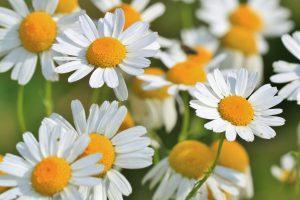 Naturheilpraxis Laucken Phytotherapie